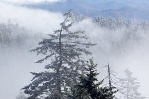 Frosted trees in the fog from Clingmans Dome