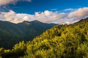 View of the Smoky Mountain greenery