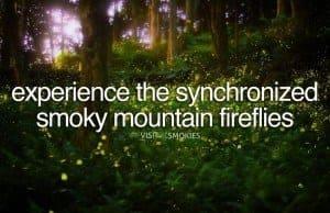 view of Synchronized Smoky Mountain fireflies