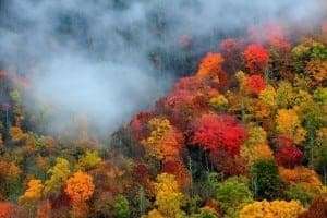 Incredible fall colors in the mountains of Gatlinburg.