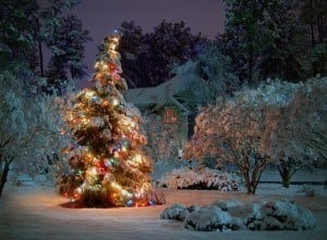 A shining Christmas tree with a snowy backdrop.