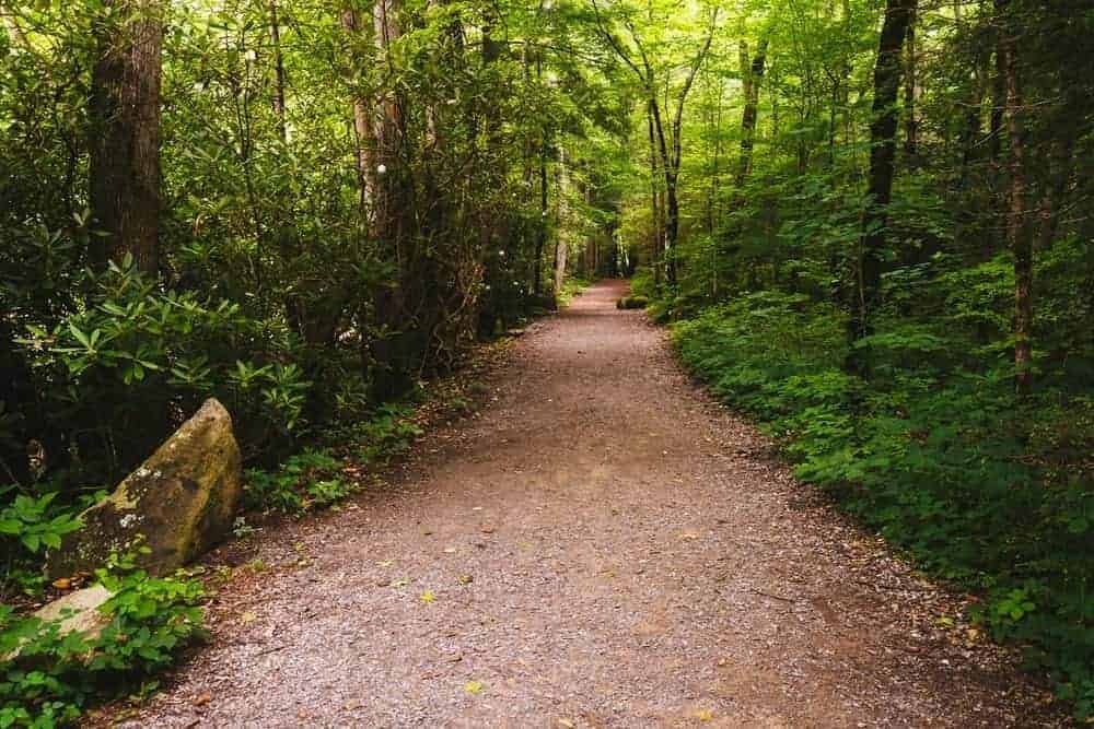 A scenic hiking trail in the Great Smoky Mountains National Park.