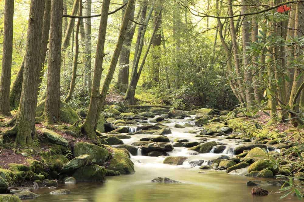 Beautiful photo of the Little River at Elkmont in the Great Smoky Mountains National Park.