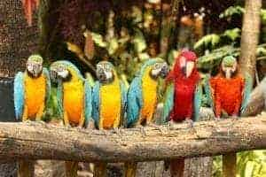 Parrots sitting on a perch.