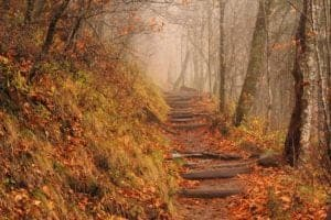 The Smoky Mountains Appalachian Trail on a foggy fall day.