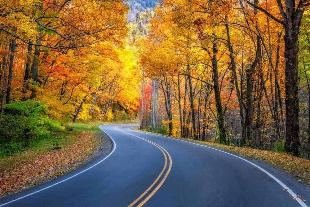 Fall colors along a road near Gatlinburg.