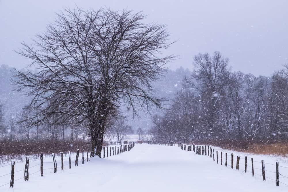 road in cades cove during winter