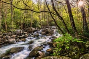 creek in the smoky mountains