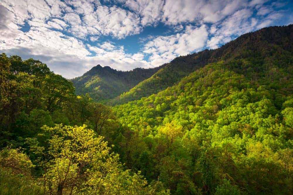 scenery in the great smoky mountains national park