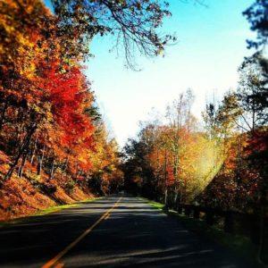 fall road in the smokies